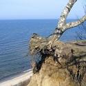 Jastrzębia Góra Noclegi nad morzem