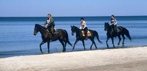 Czas nad morze - Jazda konna na plaży