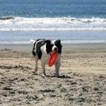 pies plaża gdzie z psem nad morze