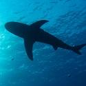 Akwarium w Gdyni-zobacz rekiny...
