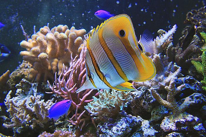 Akwarium Gdynia Oceanarium