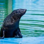 Sea Park Sarbsk atrakcje Łeba