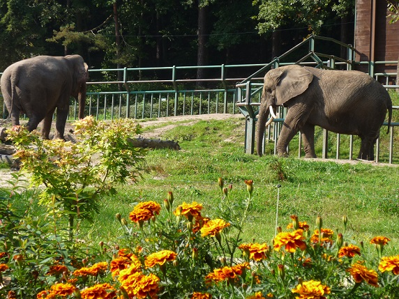 Zoo Gdańsk atrakcje