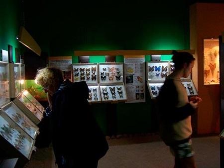 muzeum motyli łeba atrakcje co zwiedzić