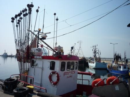 wędkarstwo morskie - połowy dorsza na morzu